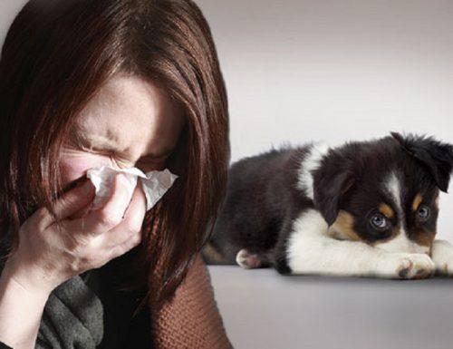 ALLERGIA AL PELO ANIMALE (Allergy to Animal Hair)