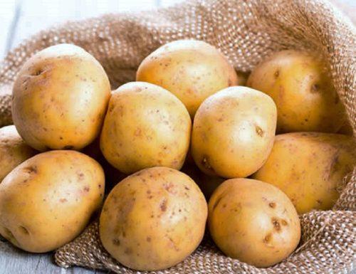 STORIA DELLA PATATA  (History of the Potato)
