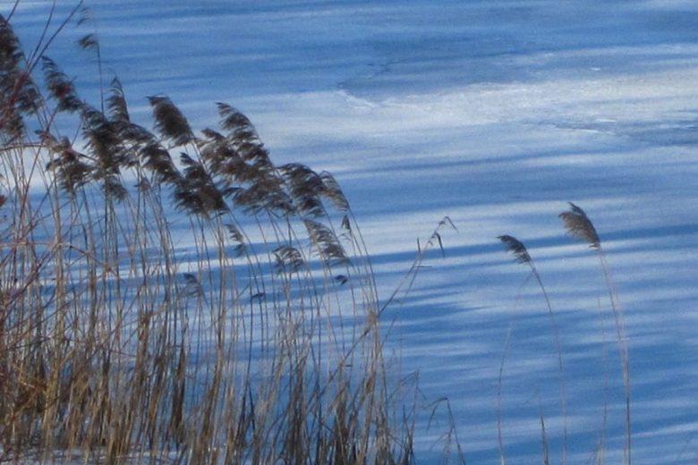 CANNE AL VENTO (Reeds in the wind) – Dal romanzo di Grazia Deledda