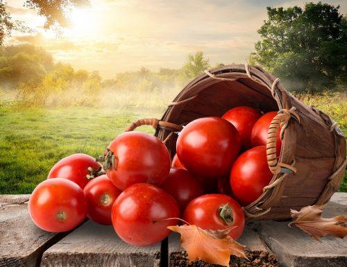 POMODORO – Tomato